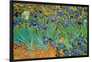 Garden of Irises (Les Irises, Saint-Remy), c. 1889 by Vincent van Gogh