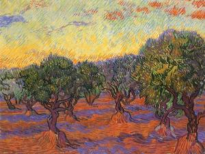 Grove of Olive Trees, 1889 by Vincent van Gogh