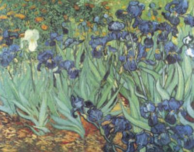 Iris by Vincent van Gogh