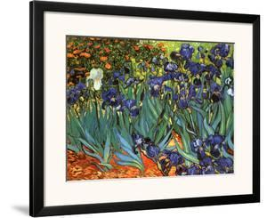 Irises, Saint-Remy, c.1889 by Vincent van Gogh