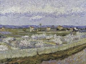 La Crau with Peach Trees in Bloom by Vincent van Gogh