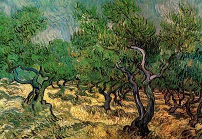 Vincent Van Gogh Olive Grove 2 Art Print Poster