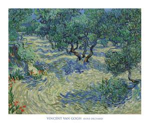 Olive Orchard, 1889 by Vincent van Gogh