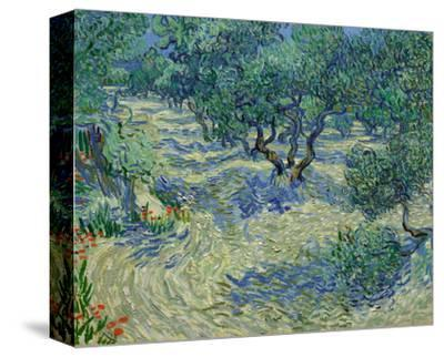 Olive Orchard, 1889 by Vincent van Gogh