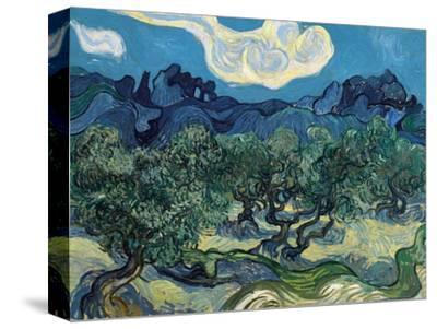 Olive Trees, 1889