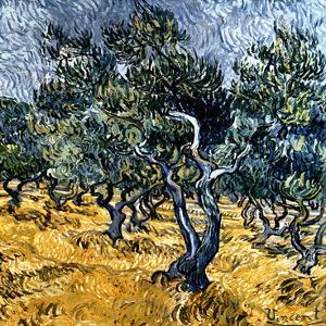 Oliveraie (Détail) by Vincent van Gogh