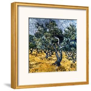 Oliveraie by Vincent van Gogh