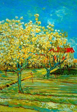 Vincent Van Gogh Orchard Art Print Poster