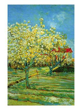 Orchard with Cypress by Vincent van Gogh