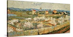 Peach Blossoms in the Crau, c.1889 by Vincent van Gogh