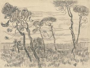 Six Pines Near the Enclosure Wall, 1899 by Vincent van Gogh
