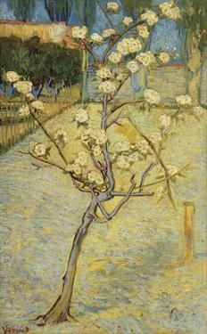 Small Pear Tree in Blossom, 1888 by Vincent van Gogh