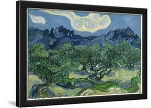 Vincent Van Gogh (The Olive Trees) Art Poster Print