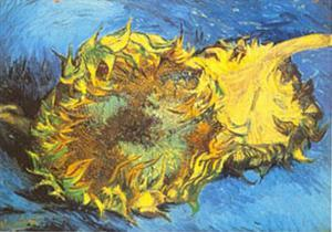 Tournesol by Vincent van Gogh