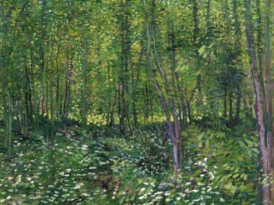 Trees and Undergrowth, c.1887 by Vincent van Gogh