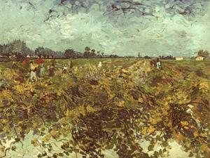 Van Gogh: Vineyard, 1888 by Vincent van Gogh