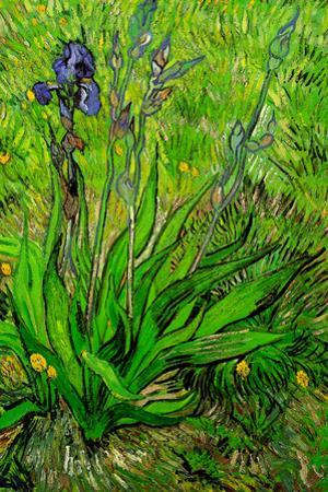 Vincent Van Gogh The Iris Plastic Sign by Vincent van Gogh
