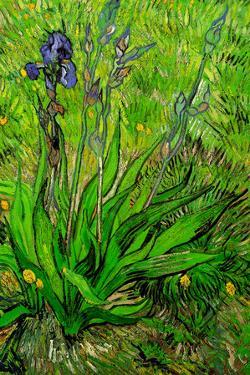 Vincent Van Gogh The Iris Plastic Sign by Vincent van Gogh