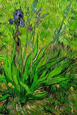 Vincent van Gogh The Iris by Vincent van Gogh