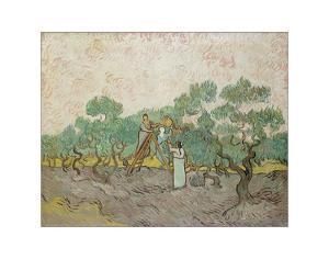 Women Picking Olives, 1889 by Vincent van Gogh