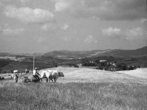 Farmer Ploughing by Vincenzo Balocchi
