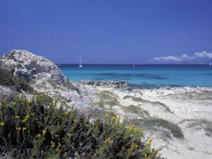 Yellow Flowers on the Beach, Formentera, Balearic Islands, Spain, Mediterranean, Europe by Vincenzo Lombardo