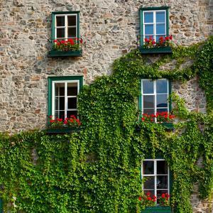 Vine covered stone house and windows, Quebec City, Quebec, Canada