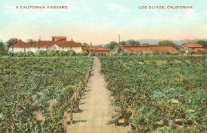 Vineyard, Los Olivos