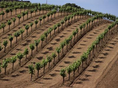 https://imgc.allpostersimages.com/img/posters/vineyard-napa-valley-california-usa_u-L-P1TR3R0.jpg?p=0