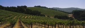Vineyard on a Landscape, Napa Valley, California, USA