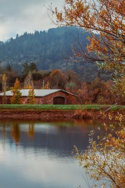 Vineyard Pond in Autumn , Calistoga Napa Valley