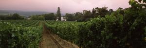 Vineyard with a Cape Dutch Style House, Vergelegen, Capetown Near Somerset West, South Africa