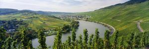 Vineyards Along Moselle River, Mosel-Saar-Ruwer, Germany
