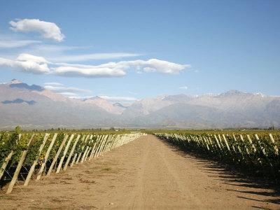 https://imgc.allpostersimages.com/img/posters/vineyards-and-the-andes-mountains-in-lujan-de-cuyo-mendoza-argentina-south-america_u-L-P91HSF0.jpg?p=0