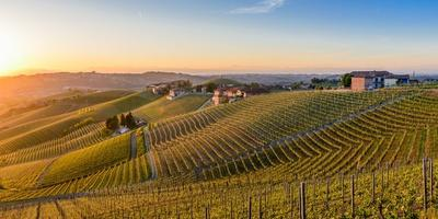 https://imgc.allpostersimages.com/img/posters/vineyards-at-barbaresco-piedmont-italy-europe_u-L-Q1BRS4V0.jpg?artPerspective=n