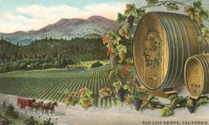 Vineyards at San Luis Obispo, California