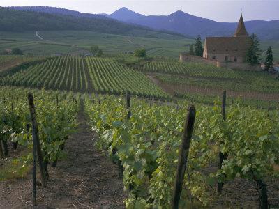 https://imgc.allpostersimages.com/img/posters/vineyards-hunawihr-alsace-france_u-L-P1TS150.jpg?p=0