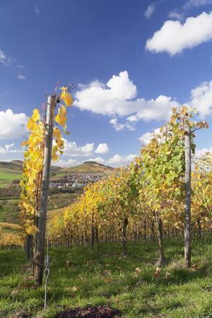 https://imgc.allpostersimages.com/img/posters/vineyards-in-autumn-oberstenfeld-ludwigsburg-district-baden-wurttemberg-germany-europe_u-L-PQ8T2Z0.jpg?artPerspective=n