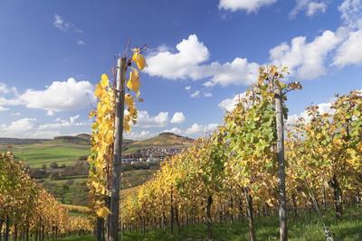 https://imgc.allpostersimages.com/img/posters/vineyards-in-autumn-oberstenfeld-ludwigsburg-district-baden-wurttemberg-germany-europe_u-L-PQ8T3B0.jpg?p=0