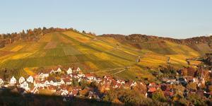 Vineyards in Autumn, Uhlbach, Stuttgart, Baden-Wurttemberg, Germany