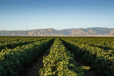 https://imgc.allpostersimages.com/img/posters/vineyards-in-san-joaquin-valley-california-united-states-of-america-north-america_u-L-PWFM8I0.jpg?p=0