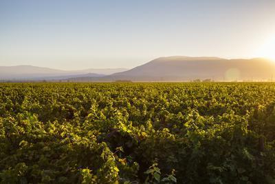 https://imgc.allpostersimages.com/img/posters/vineyards-in-san-joaquin-valley-california-united-states-of-america-north-america_u-L-PWFSAC0.jpg?p=0