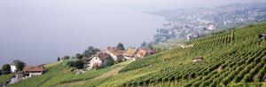 Vineyards, Lausanne, Lake Geneva, Switzerland