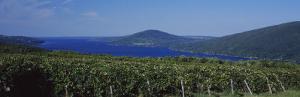 Vineyards Near a Lake, Canandaigua Lake, Finger Lakes, New York State, USA