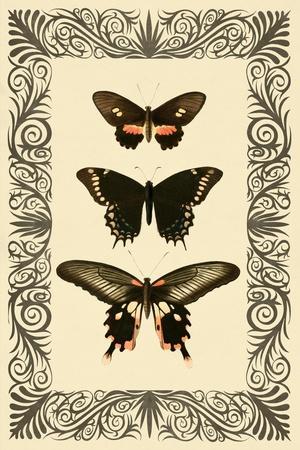 https://imgc.allpostersimages.com/img/posters/vintage-butterfly-trio_u-L-Q1G8MB50.jpg?p=0