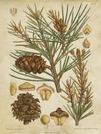Vintage Conifers II