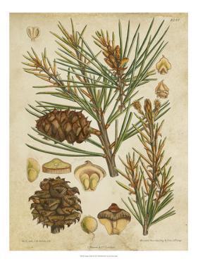 Vintage Conifers II