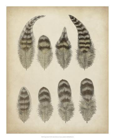 https://imgc.allpostersimages.com/img/posters/vintage-feathers-i_u-L-F6588I0.jpg?artPerspective=n