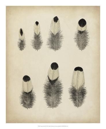 https://imgc.allpostersimages.com/img/posters/vintage-feathers-ii_u-L-F6588J0.jpg?artPerspective=n