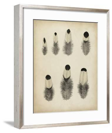 Vintage Feathers II--Framed Giclee Print